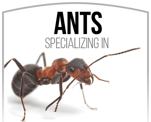 Activ Pest Solutions Ant Extermination
