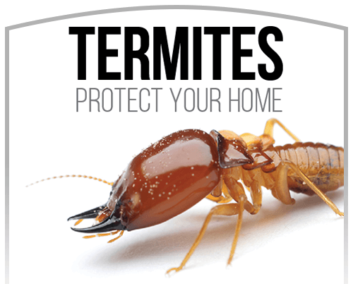 Activ Pest Termite Treatment