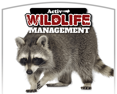 Activ Pest Wildlife Removal