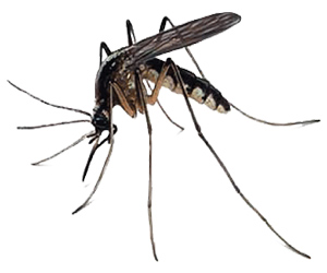 Mosquito Control services in Long Neck, Delaware