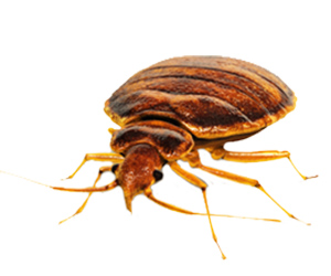 Bed Bug Control Services in Seaford, Delaware