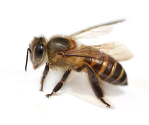 Bee Control in Rehoboth Beach, DE