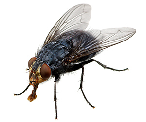 Fly Control Services in Milton, Delaware