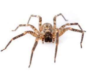 Spider Control Services in Delmar, Delaware