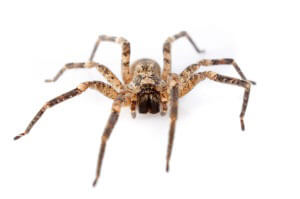 Spider Control Services in Seaford, Delaware