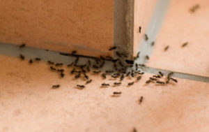 Avoid Ants in the Winter