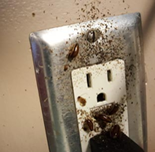 cockroaches in power outlet