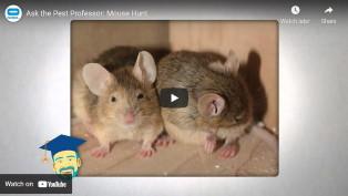 pestworld mouse hunt video